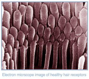 hairreceptors